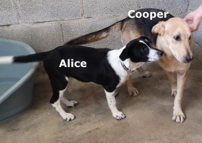 alice & cooper abandoned