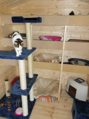 warm sleeping quarters at the AID cattery