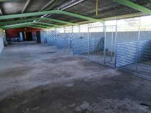 AID shelter new kennels